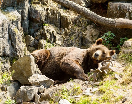 Learning from healthy bears