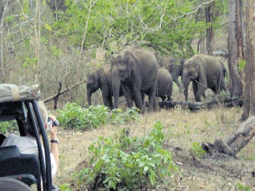 The call of the wild draws tourists to Kabini River Lodge