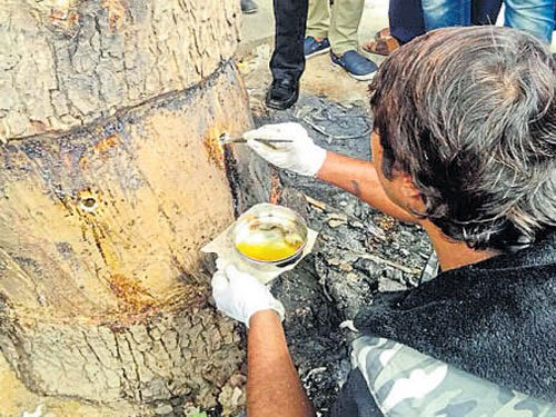 Conservationist revives tree on verge of death
