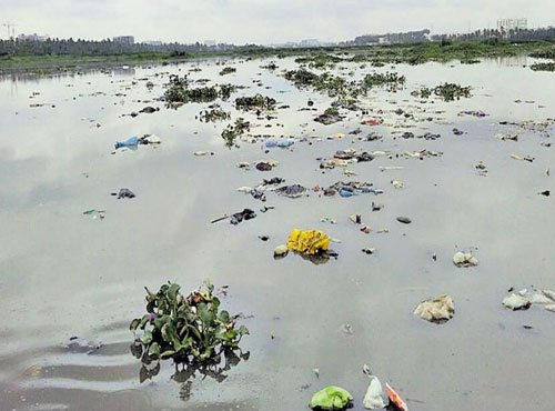 Dead fish found floating on polluted Varthur lake