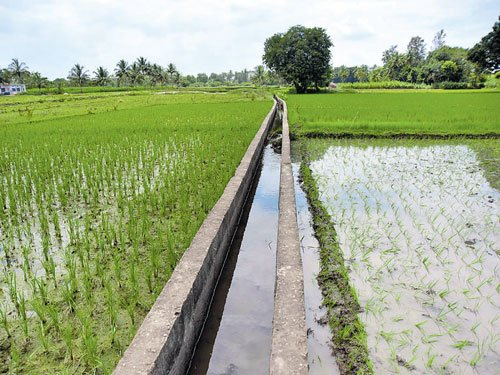Smile on delta farmers' faces as water reaches TN