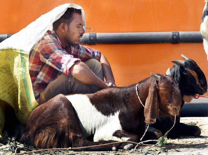 HC allows slaughter of goats on a building terrace on Bakrid