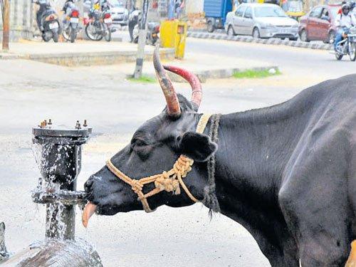 Bengaluru staring at a severe water crisis, warns IISc study