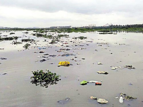 After government's cold response, residents step in to save Varthur lake