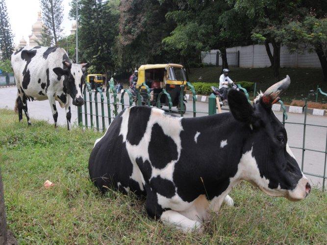 NHRC asks Centre about action taken against cow vigilantes