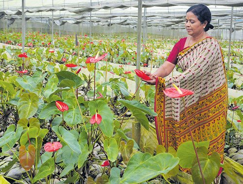 Her Journey With Flowers Deccan Herald