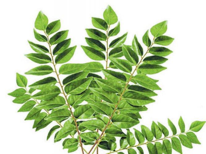 Health leaves