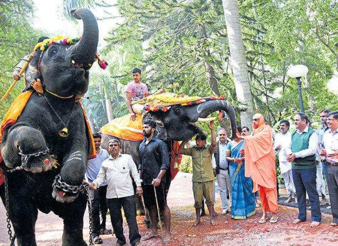 Suttur Mutt returns 2 jumbos to Forest dept