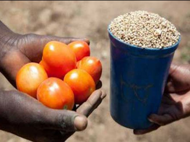 Villagers barter wheat with groceries to beat currency blues