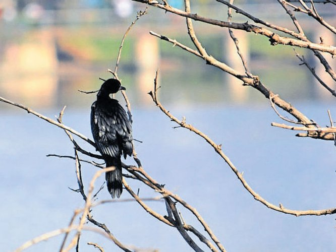Bird-watching, music, games to  be top attractions at lake festival