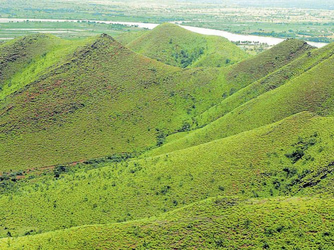 Calls to retain Kappatagudda Hills as reserve forest grow shriller