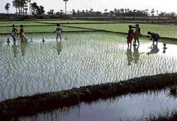 Upper Bhadra Irrigation project expansion faces green hurdle