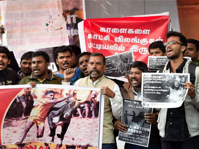 Govt's 2016 notification had safeguards for bulls