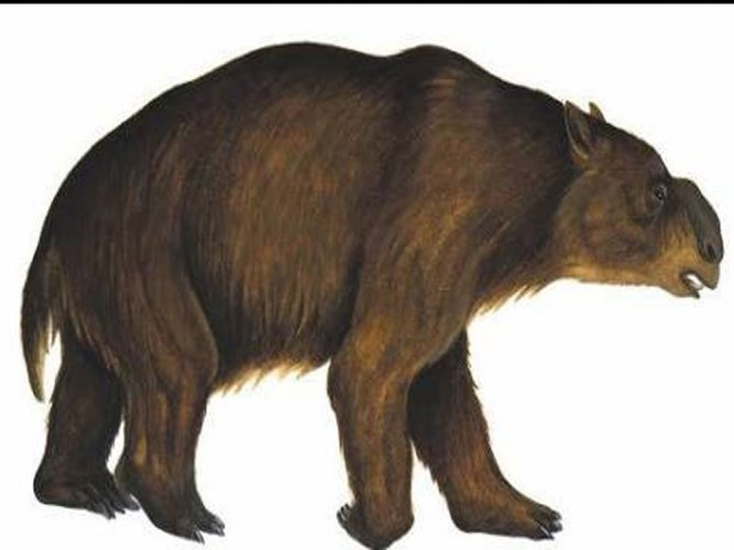 Humans, not climate, wiped out Australian megafauna: study