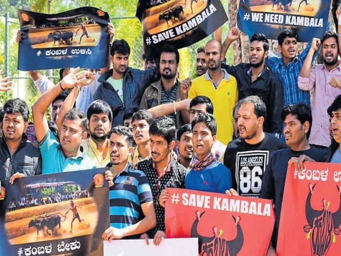 Organisers to defy ban; Kambala on Jan 28