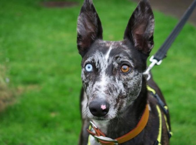 Dog named after David Bowie finds new home