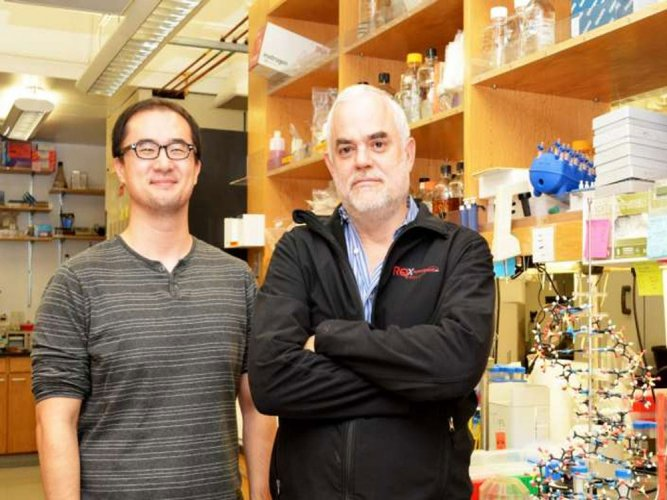 World's first stable semi-synthetic organism created