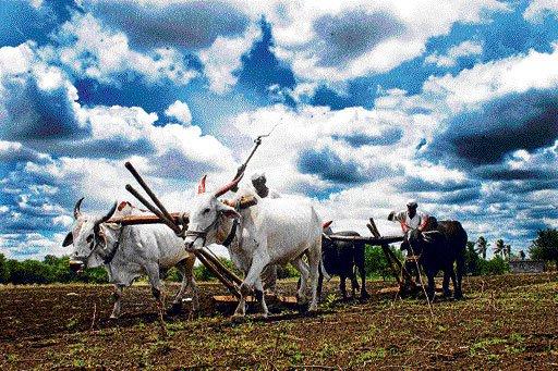 Govt waives Rs 660.50 cr interest on crop loans for Nov-Dec