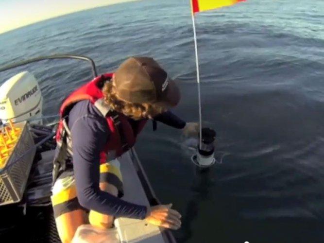Tiny underwater robots mimic ocean life