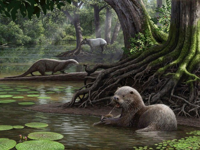 Wolf-sized otters roamed Earth over 6 million years ago