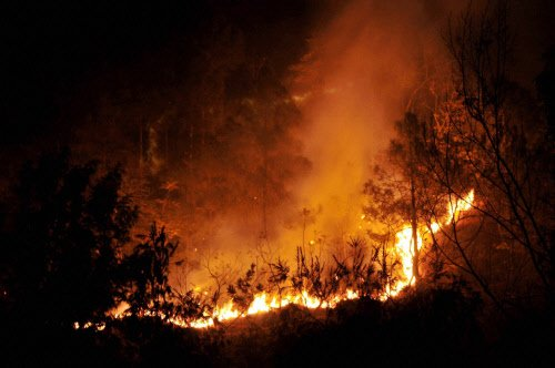 After Nagarahole fires, stress on buying water to prevent wildfires