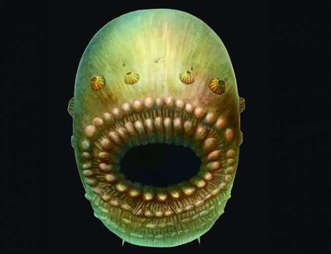 'Bag-like sea creature is our oldest known ancestor'