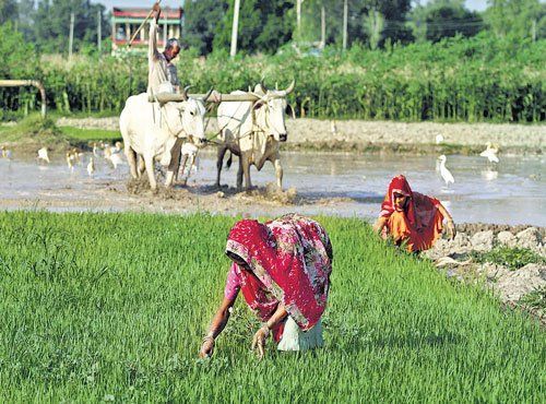 Agri credit raised to record Rs 10 lakh cr in FY18