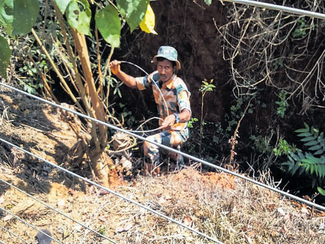 Clear snares near forests, department tells coffee planters