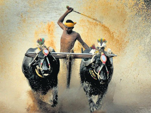 Assembly clears bill to allow Kambala