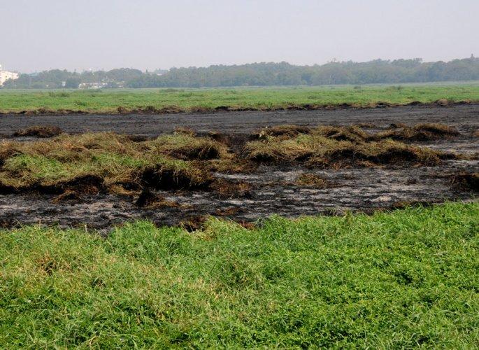 Work on reviving sick Bellandur lake to begin in three months