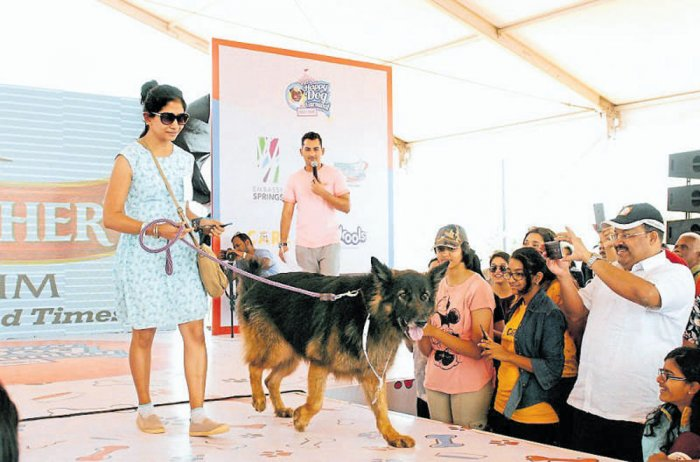 Dogs walk the ramp as their owners look on gleefully