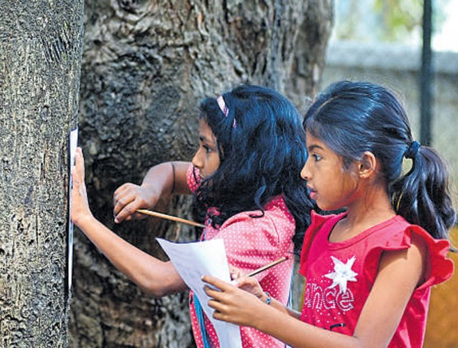 Trees tell their stories at NGMA