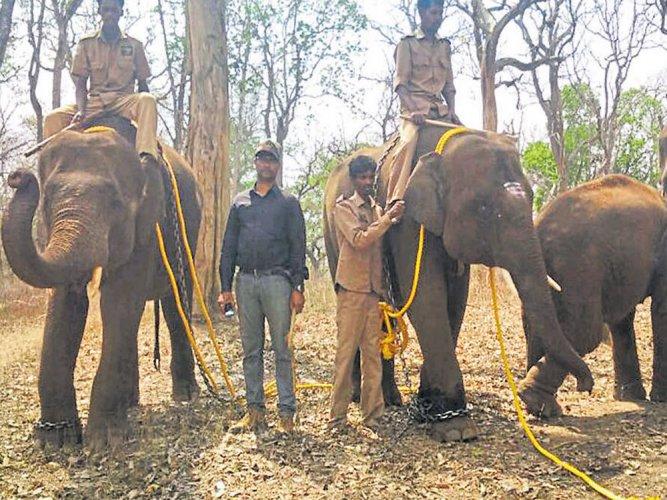 4 elephants from Mathigodu camp leave for Uttarakhand
