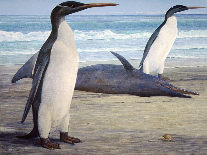 Ancient giant penguin lived alongside dinosaurs: study