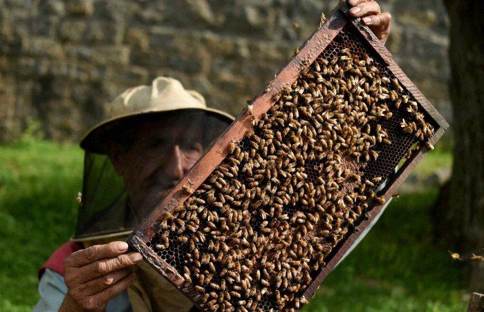 Training in urban apiculture