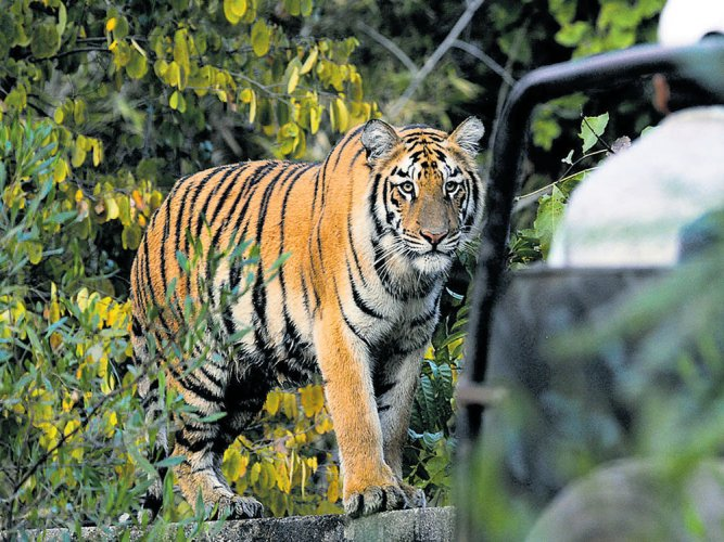 Corbett director removed after shoot-at-sight order