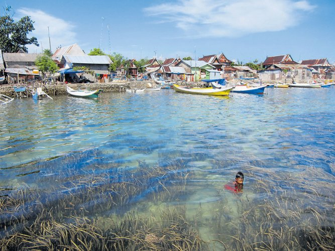 The need to save seagrass meadows