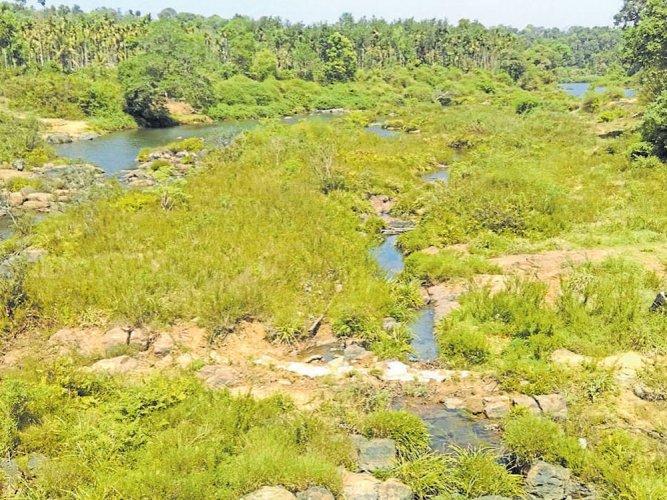 Severe water crisis haunts Virajpet taluk