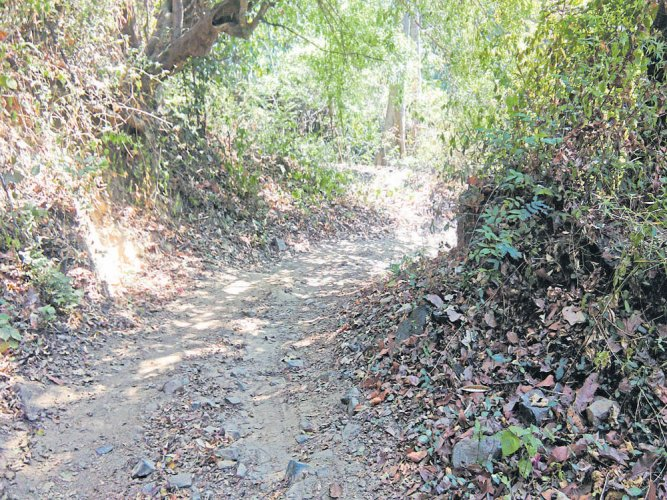 Despite stringent forest rules, these villagers insist on road