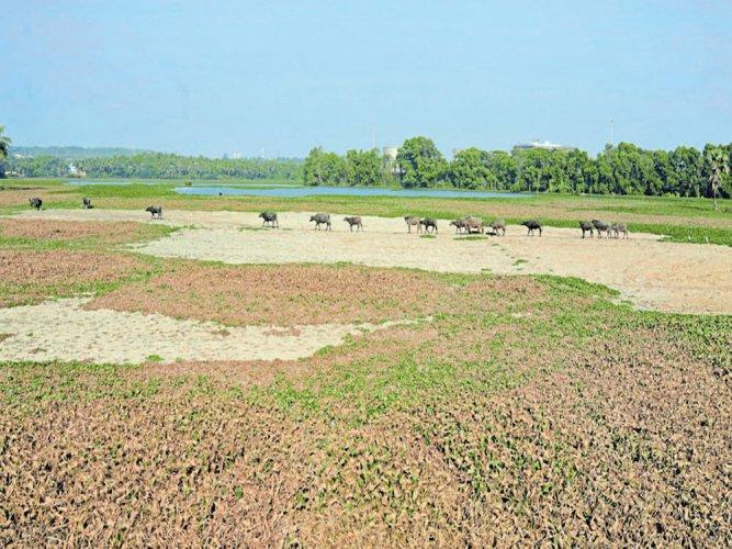 Plans to develop Baggundi, Gujjarakkere lakes in Mangaluru