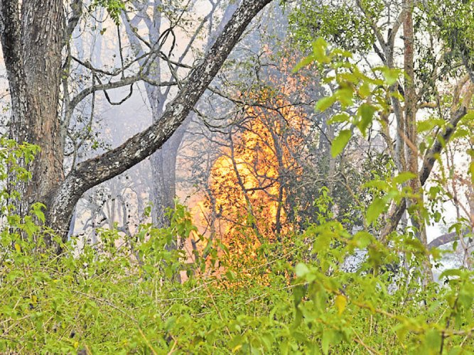 Forest fire spreads to Anekadu; 150 acres gutted
