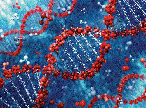 Tiny DNA machines may drive disease detection, drug delivery