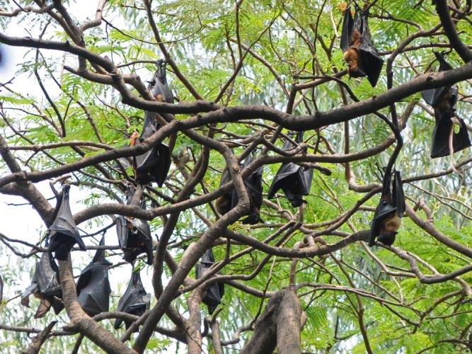 Prehistoric ancestor of leukaemia virus found in bats