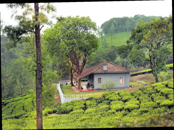 In the green  plantations