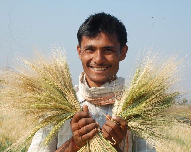 Preserving wheat diversity