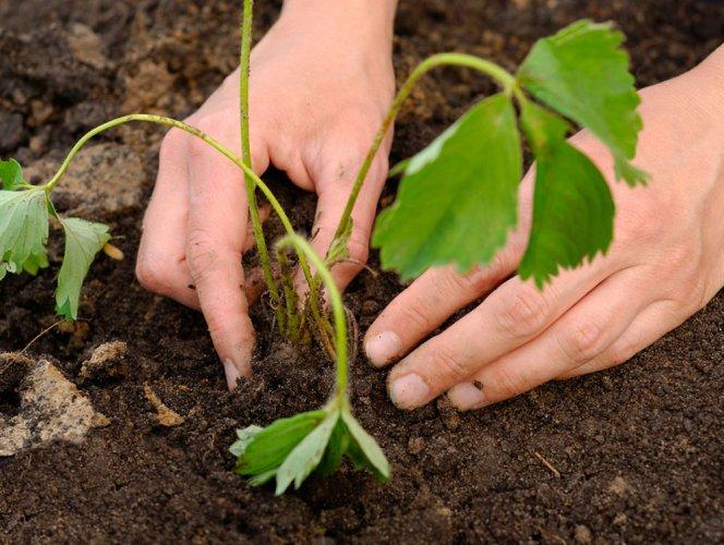 Neem-coated urea preserves soil health, improves yield: study