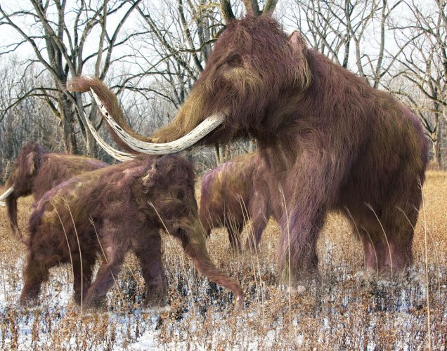 Protect elephants or bring back the mammoth?