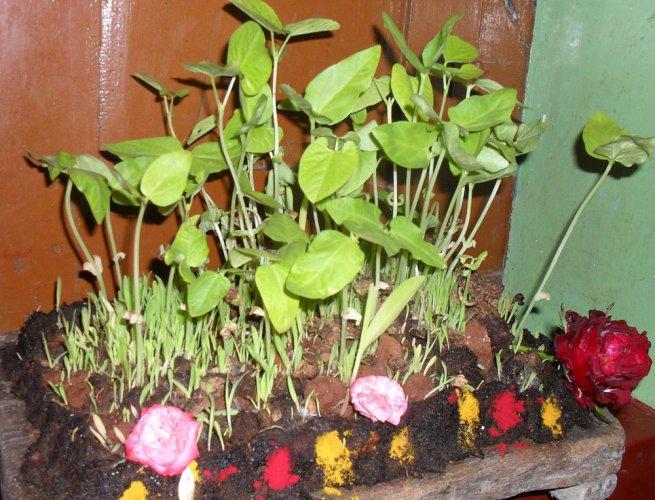 Unique Ugadi traditions
