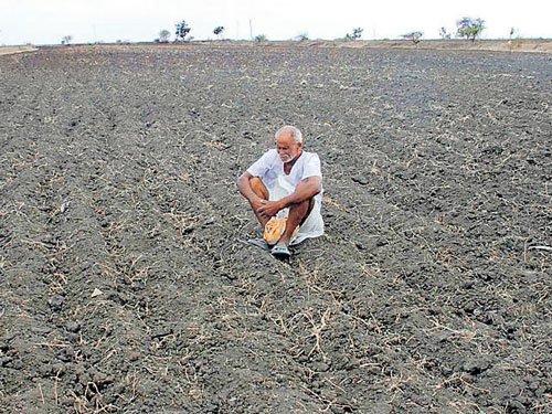 SC demands action plan for farmer suicides