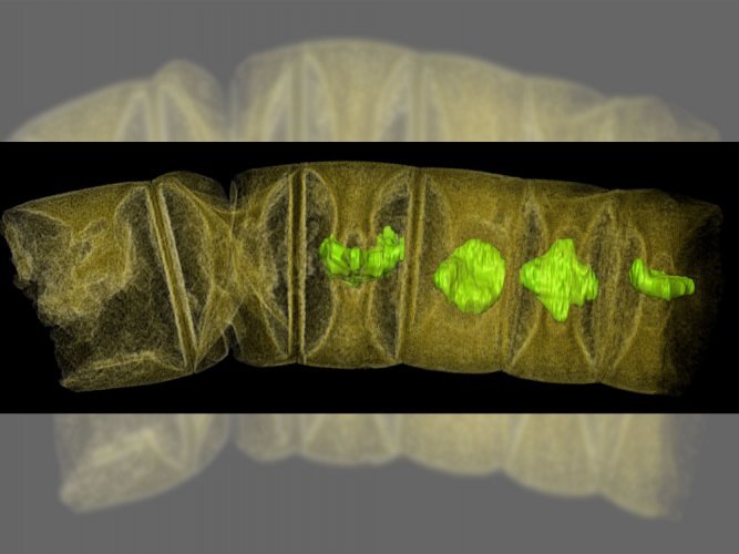 Fossil algae hold clues to origin of modern photosynthesis